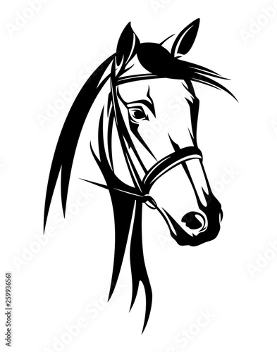Tablou Canvas horse head with bridle - black and white equestrian sport vector portrait