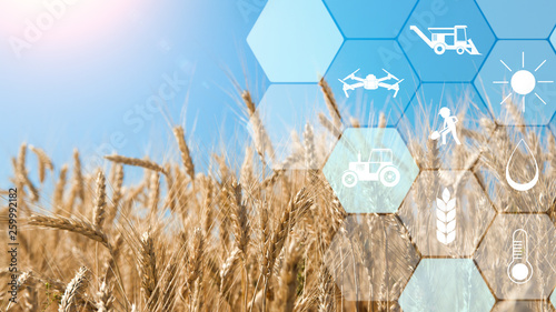 Valokuva Precision agriculture network icons on wheat field background