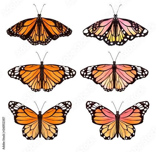 Canvas Print set of butterflies