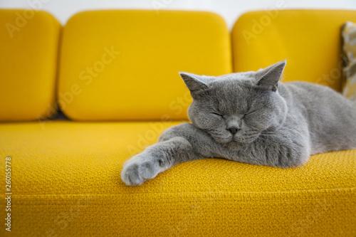 Photo Cat sleeping on a mustard yellow sofa.