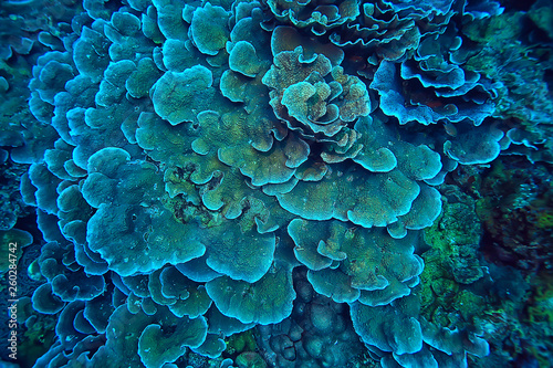 coral reef macro / texture, abstract marine ecosystem background on a coral reef Fototapet