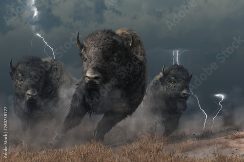 Leinwand Poster Three buffalo stampede accross the North American prairie