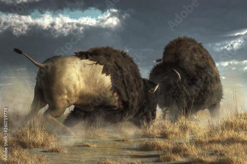 Two massive American buffalo go head to head, literally Fotobehang