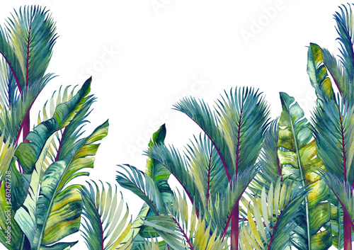 Tropical palm trees and banana leaves. Isolated watercolor background.