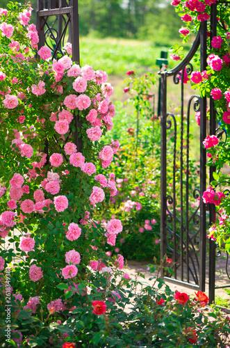 Leinwand Poster roses in the garden
