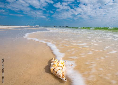 Fotografija A seashell sits calmly as the ocean waves break against the white sand