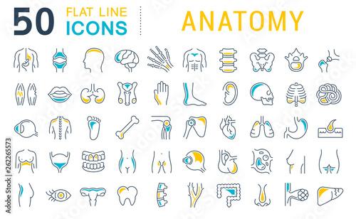 Fotografia Set Vector Line Icons of Anatomy