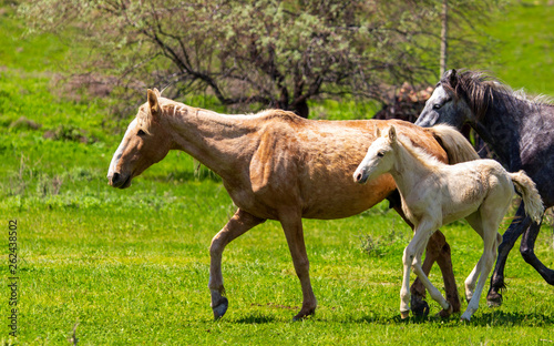 Horse with a little foal in the park