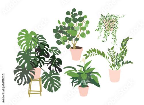 Fotografie, Obraz potted plants collection