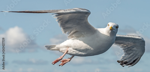 Photo a seagull in flight