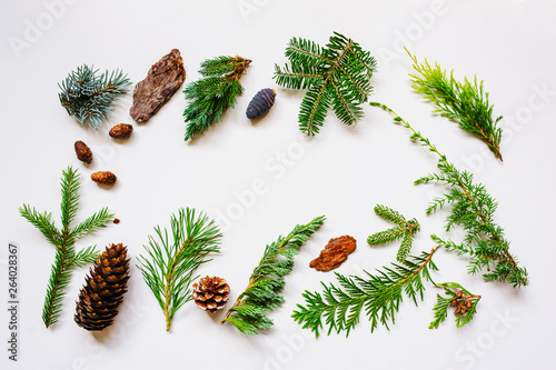 Canvas Print collection of various conifers and its cones on white backround