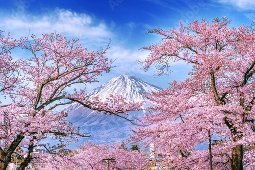 Valokuva Fuji mountain and cherry blossoms in spring, Japan.