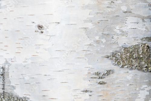 Fotografija The macro shot of birch bark texture or background