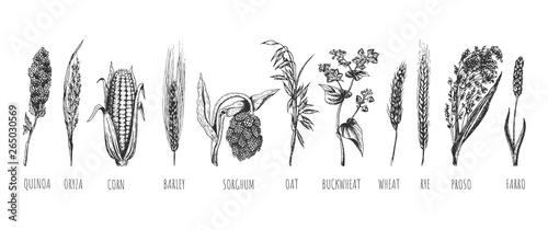 Fotografia Wheat ears cereals crop sketch set