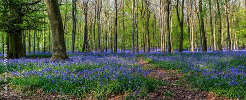 Foto Forest full of bluebells flowers