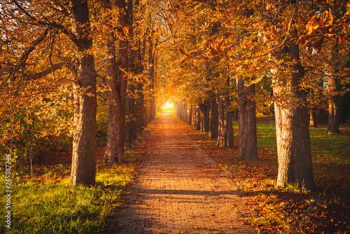 Murais de parede Tree avenue in autumn during sunset