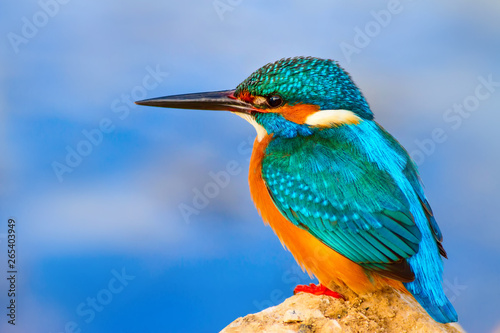 Wallpaper Mural Colorful bird kingfisher