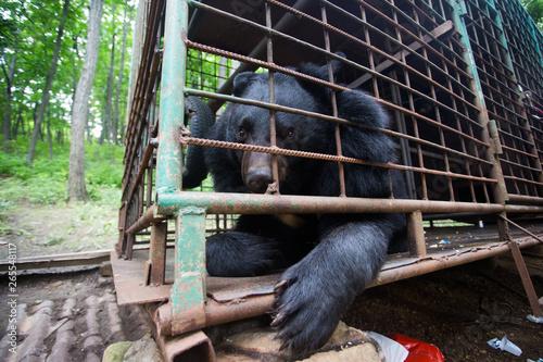 Valokuva Himalayan bear in an iron cage