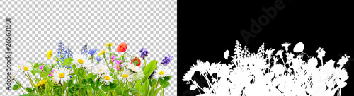 Fotografering spring grass and daisy wildflowers isolated background
