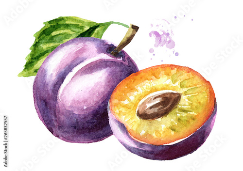 Photo Ripe plum  watercolor hand drawn illustration   isolated on white background