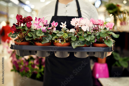 Close-up of florist holding tray of potted plants in flower shop