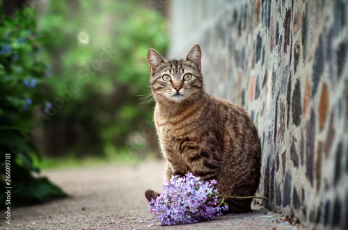 Wallpaper Mural striped cat portrait with flowers