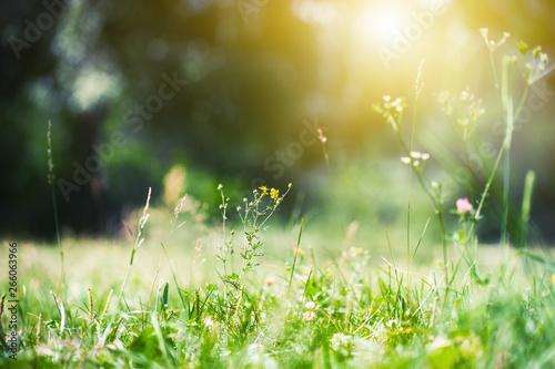 Fotografie, Obraz Green grass in the summer forest in the sunlight