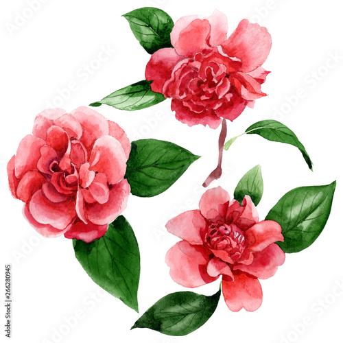 Obraz na plátne Pink camelia floral botanical flowers