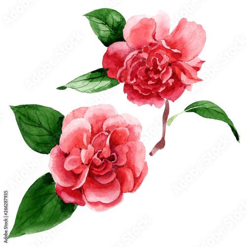 Billede på lærred Pink camelia floral botanical flowers