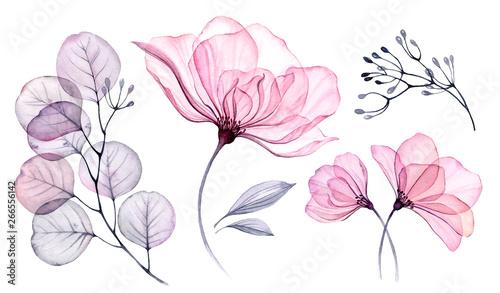 Fotografía Transparent watercolor floral set bundle of roses, bellflower, buds, leaves, bra