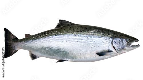 Obraz na płótnie Wild Baltic salmon isolated on white background
