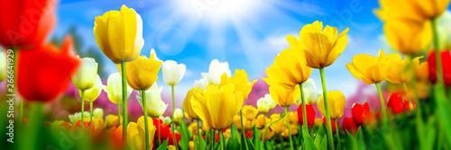 Naklejka na szafę Krajobraz z czerwonymi i żółtymi Tulipanami ze światłem Słonecznym