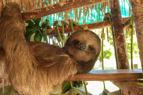 Photo Smiling Sloth