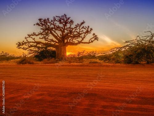 Fotografiet Silhouette of baobab
