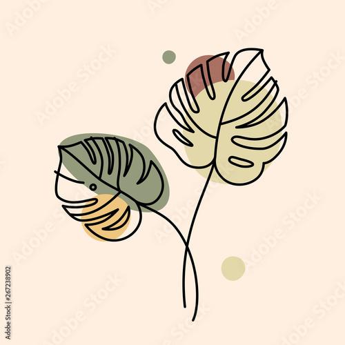 Fotografia Vector illustration in minimal linear style - monstera leaves