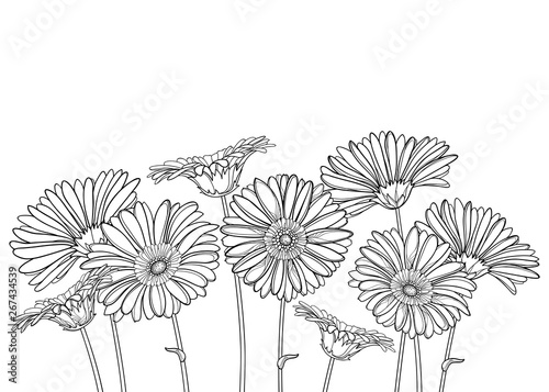 Carta da parati Bouquet with outline Gerbera or Gerber flower and ornate bud in black isolated on white background