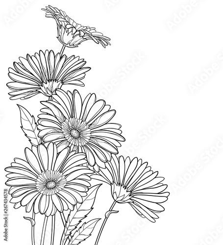 Fotografie, Obraz Corner bouquet of outline Gerbera or Gerber flower in black isolated on white background