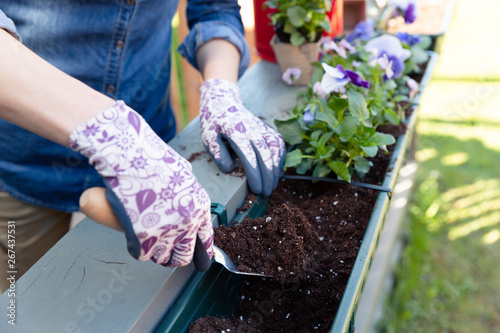 Photo Gardeners hands planting flowers in pot with dirt or soil in container on terrace balcony garden
