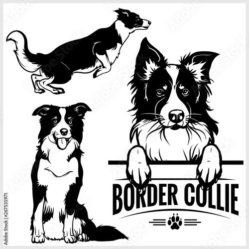 Fotografía Border Collie dog - vector set isolated illustration on white background