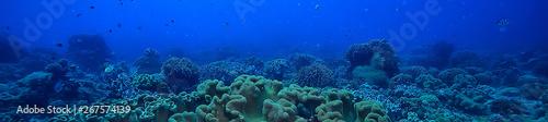 Fotografía marine ecosystem underwater view / blue ocean wild nature in the sea, abstract b