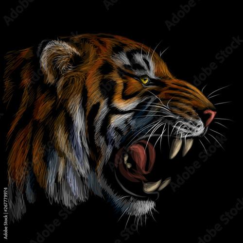 Canvas Print Color portrait of a tiger on a black background.
