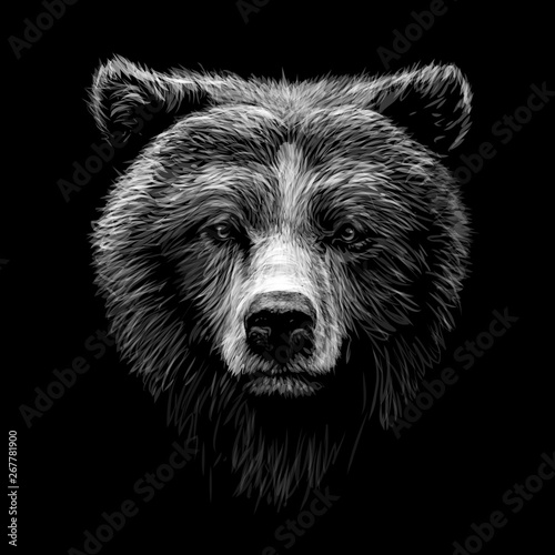 Fotografia Monochrome portrait of a brown bear looking ahead against a black background