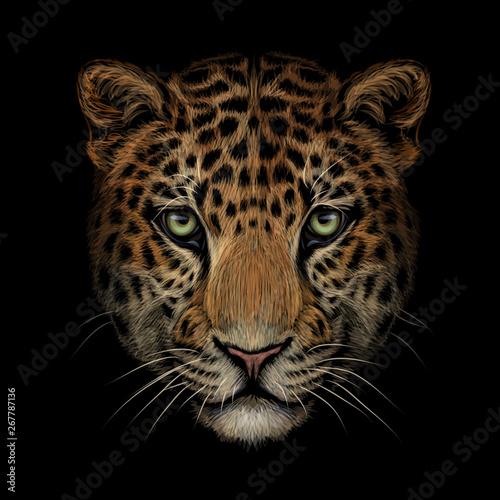Fototapeta Color portrait of Jaguar/leopard looking forward on a black background