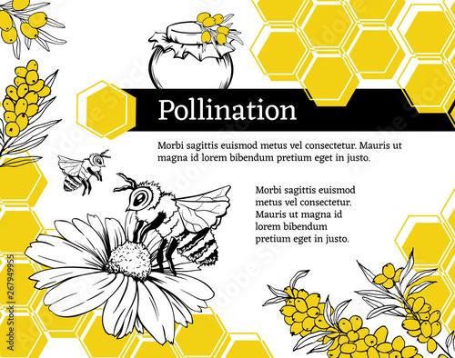 Obraz na plátně Pollination hand drawn vector illustration