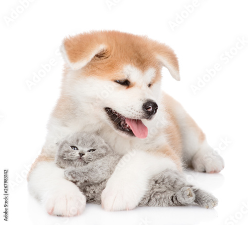 Tableau sur Toile Akita inu puppy hugging baby kitten. isolated on white background