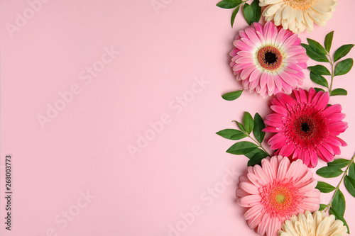 Stampa su Tela Flat lay composition with beautiful bright gerbera flowers on color background, top view