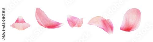 Photo Set of pink peony petals