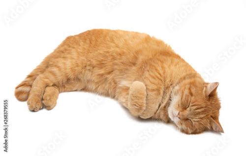Slika na platnu ginger cat isolated