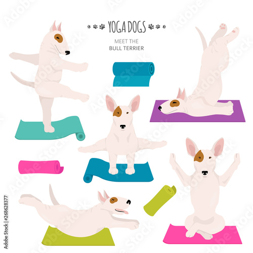 Stampa su Tela Yoga dogs poses and exercises. Bull terrier clipart