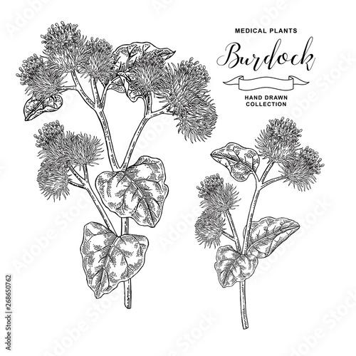 Obraz na płótnie Burdock branch hand drawn